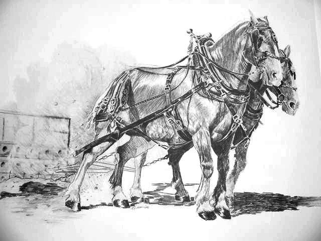 The Middle Weights Draft Horse Art Print